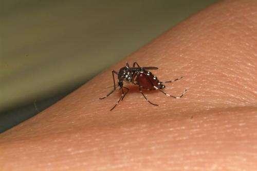 Chikungunya poised to invade the Americas