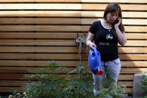 Chilean moms growing support for medical marijuana