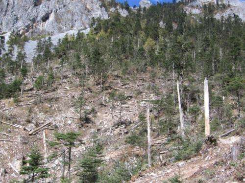 China's old-growth forests vanishing despite government policies, Dartmouth research shows