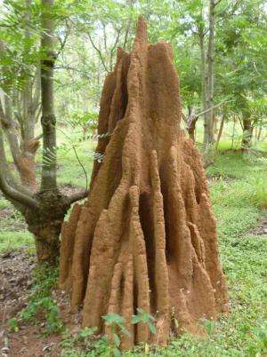 Climate control in termite mounds