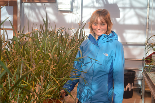Climate-resilient wheat