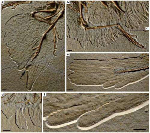 New fossil shows Archaeopteryx sported 'feathered trousers'