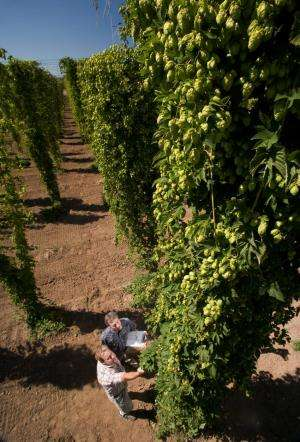 Compound from hops aids cognitive function in young animals