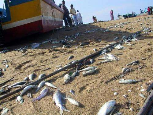 Dead fish on a tsunami-hit beach in Penang, Malaysia on December 27, 2004