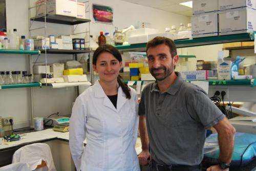 Described novel regulator of a protein inactive in over 50 percent of human tumors