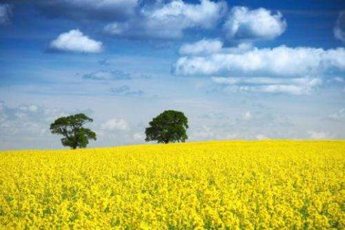 Developing new methods to assess resistance to disease in young oilseed rape plants