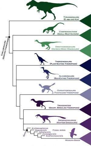 Dinosaur family tree gives fresh insight into rapid rise of birds
