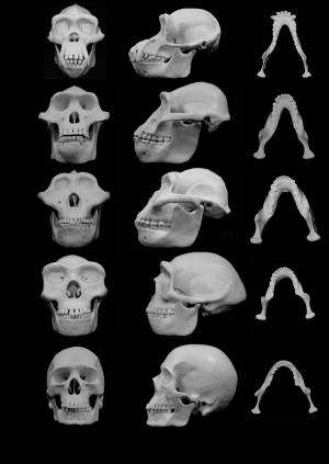 Did violence shape our faces?