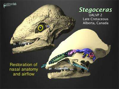 Dinosaur breathing study shows that noses enhanced smelling and cooled brain