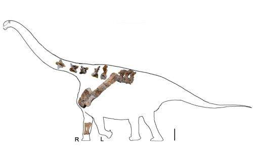 Dinosaur fossils from China help Penn researchers describe new 'Titan'