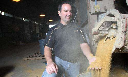 Distillers grains with calcium oxide improve cattle diets