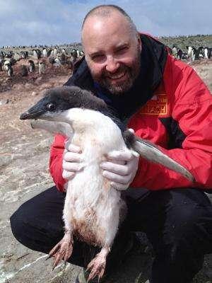 Distinct avian influenza viruses found in Antarctic penguins