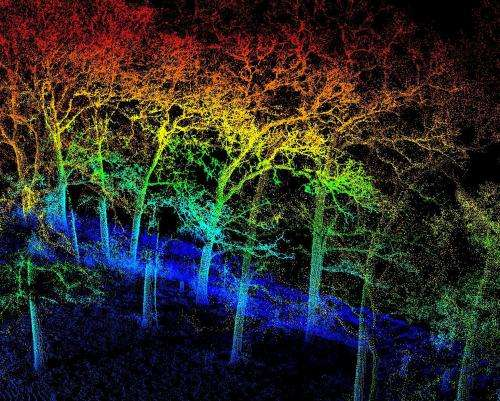Drought-stricken trees offer study platform for AgriLife Research scientists