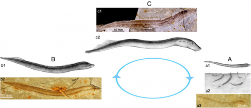 Earliest-known lamprey larva fossils unearthed in Inner Mongolia