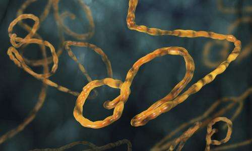 Ebola forecasting uses model developed by EU project