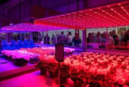 Led Lighting Can Significantly Reduce Greenhouse