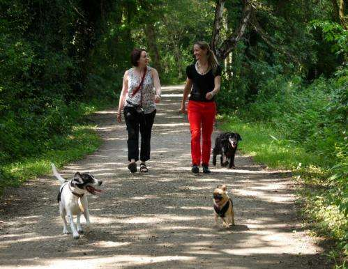 Education and dog-friendly neighbourhoods could tackle obesity
