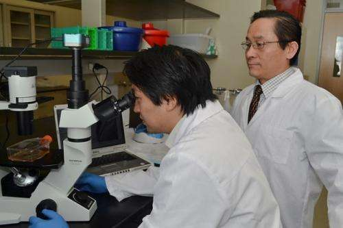 Embryonic stem cells offer treatment promise for multiple sclerosis