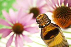 """Evidence is weak"" for cold treatment with echinacea"