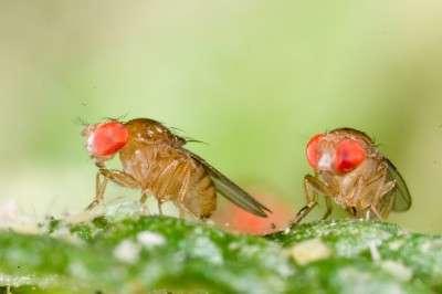 Evolution in rainforest flies points to climate change survival