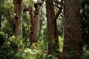 Experts size up potential biodiversity sanctuaries