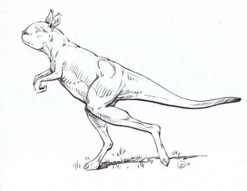 Extinct giant kangaroos may have been hop-less