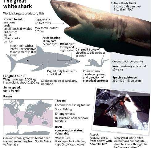 Australia hunts for killer shark with spear in throat