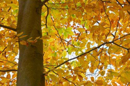Fall foliage season may be later, but longer on warmer Earth