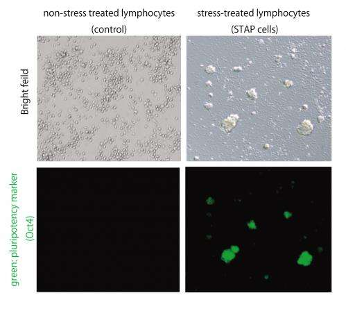 Transplant tissue: Stem cells in 'revolutionary' boost