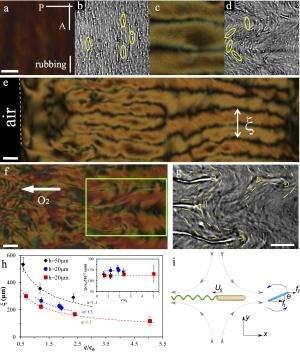 It's alive! Scientists combine liquid crystals and living bacteria