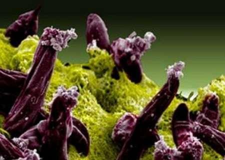 Fighting resistance to antimalarial drug