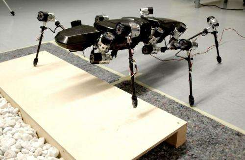 First steps for Hector the robot stick insect