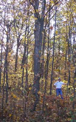 Five anthropogenic factors that will radically alter northern forests in 50 years