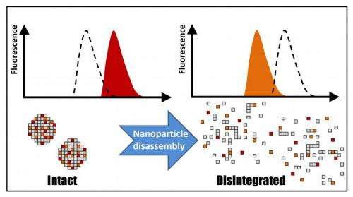 Fluorescent-based tool reveals how medical nanoparticles biodegrade in real time