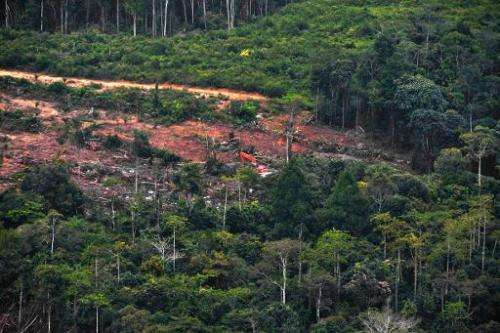 Forest is being cleared of trees on Indonesian part of Borneo Island, on February 24, 2014