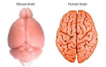 From dino brains to thought control—10 fascinating brain findings