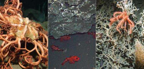 From 'Finding Nemo' to minerals -- what riches lie in the deep sea?