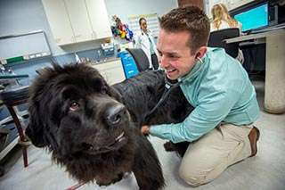 Gene mutation for heart disease in Newfoundland dogs identified