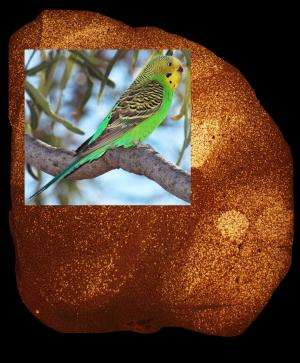 Genes tell story of birdsong and human speech