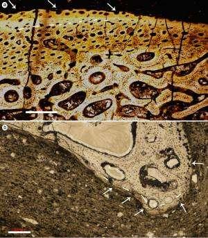 Pompeii-style volcano gave China its dinosaur trove