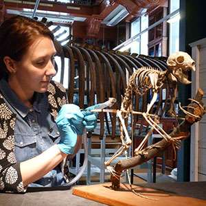 Grant Museum starts major project to preserve rarest skeleton in the world