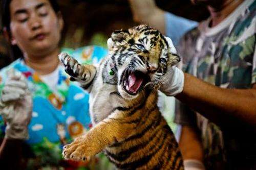 Handout photo obtained on December 12, 2012 from the World Wildlife Fund (WWF) shows a veterinary team from the wildlife forensi