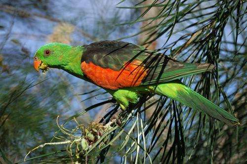 Haphazard reporting puts Australian parrots at risk