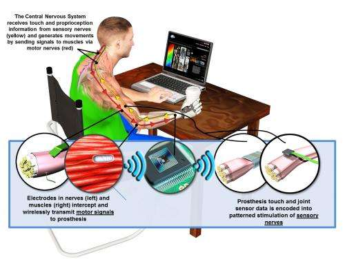 Haptic technology aims to overcome physical and psychological effects of upper limb loss