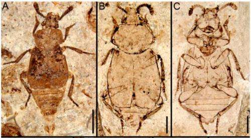 Researchers find evidence of earliest instance of parental care in scavenger beetle