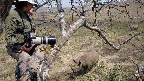 Helping to save the rhino