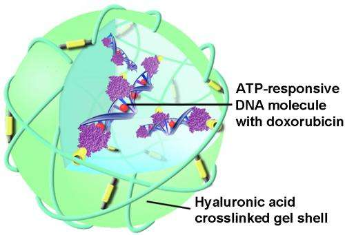 New technique uses ATP as trigger for targeted anti-cancer drug delivery
