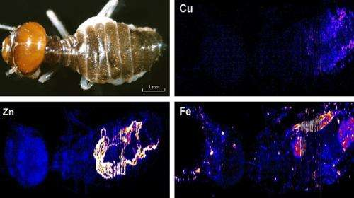 Hidden ants reveal gold better than top-dwelling termites