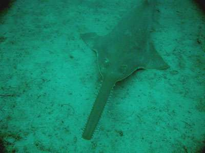 Historic advances in international shark and ray conservation