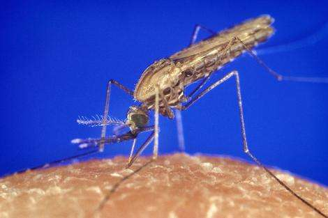 Homing in on the mosquito